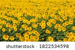 Photos Of Various Agricultural...