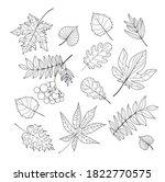 a set of leaves   maple  birch  ... | Shutterstock .eps vector #1822770575