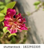 Small photo of Flowers Beauty slacken Anxiety Both give inspiration either they are withered flowers or fresh flowers