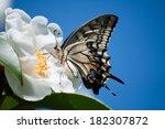 Stock photo swallowtail 182307872
