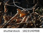 Collection Of Cut Branches In A ...