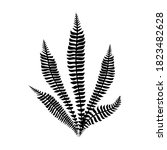 black fern leaves vector.... | Shutterstock .eps vector #1823482628