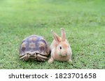 Rabbit On The Turtle After...