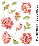 watercolor illustration  flower ... | Shutterstock . vector #182388326