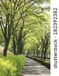 zelkova tree lined sidewalk ... | Shutterstock . vector #182392382