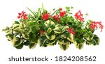 Cut Out Red Flowers. Flower Bed ...