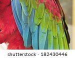 colorful macaw feathers  | Shutterstock . vector #182430446
