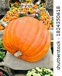 Giant Pumpkin In Fall Display...