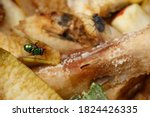 A Fly On Rotting Fruit. Rotting ...