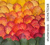 gradient of multicolored aspen... | Shutterstock . vector #1824670268