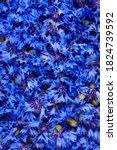 Blue Fresh Cornflowers Buds...