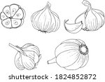 garlic  a linear black and...   Shutterstock .eps vector #1824852872