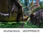 Trail In Forest Between Large...