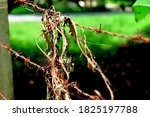 Close Up Rusty Barbed Wire.an...