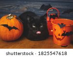 Trick Or Treat  Black Cat...
