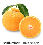 Dekopon Orange Or Sumo Mandarin ...