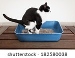 Stock photo cat poops in the litter 182580038