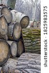 Large Sawn Logs. A Pile Of...