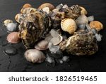 fresh fisherman catch with... | Shutterstock . vector #1826519465