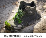 Old Shoe Covered With Moss....