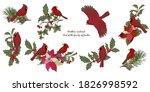 northern cardinal birds and...
