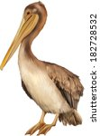 Pelican Standing Proud On A...