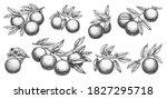 orange branch sketch. growth...   Shutterstock .eps vector #1827295718