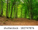 forest glade with flowers in the cool shade of the trees a hot summer day - stock photo