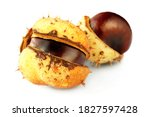 Isolated Fresh Chestnuts On A...