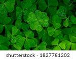 Four leaf clover on green...