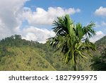 Winter Tousled Bamboo Palm On...