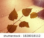 A Yellow Leaf On A Wet Window....