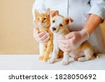 Vet examining dog and cat....