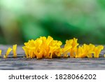 Yellow Mushrooms On Wooden In...