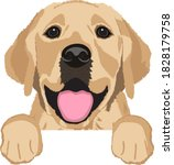Cute Labrador Retriever On...