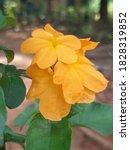 Yellow Beautiful Flower...