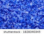 Floral Background   Blue Fresh...