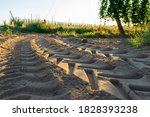 Tractor Tracks In Sand With...