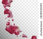 rose leaf. air concept. luxury...   Shutterstock .eps vector #1828520345