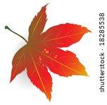 maple leaf illustration with... | Shutterstock .eps vector #18285538