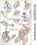 hand drawn monkey vector set | Shutterstock .eps vector #182856218