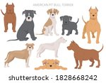 american pit bull terrier dogs...