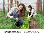 smiling agriculture woman... | Shutterstock . vector #182907272