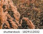 it is beautiful summer...   Shutterstock . vector #1829112032