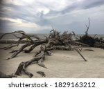 Large Driftwood Laying On Beach