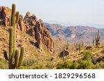Saguaro Cactus In Desert...