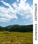 Field With Round Alpacas In...