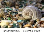 Seashells With Glass On The...