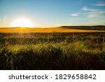 Wide view sunrise over wheat field