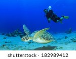 green sea turtle and scuba diver | Shutterstock . vector #182989412